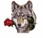 Le loup le plus clas de tous les animaux