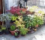 plantes en pots dans un coin bétonné
