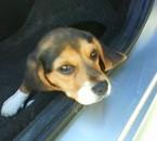 voici mon petit chien qui a 2 mois