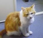 mon chat roukiné
