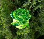 vert roseeee
