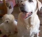 Dixcy et Jade aussi apelées Loreil et Hardy ^^
