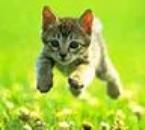 le chaton de la maison qui saute dans le jardin