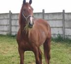 mom cheval
