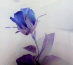 La jOliie Fleur de Djé :p