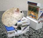 Si même les hamster s'y mettent ^^