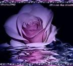 Cette rose dans la nuit pour vous mes amours