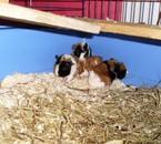 les 5 petits de DivX, ils sont nés le 10.10.2008 au matin