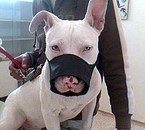tonerto baybi gentille chien ;p