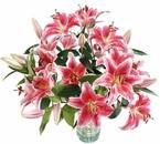 La douceur des fleurs