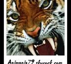 Animania79.skyrock.com