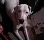 teuf mon chien