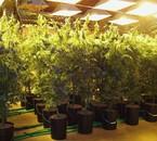 mai plantes