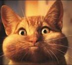 the cat..