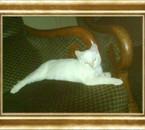 mon catou