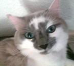 mon chat bisou