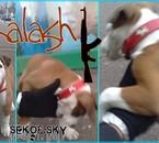Kalash qui s'amuse avec mon gant :D
