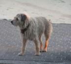 mon vieux bob 1992 / 2009
