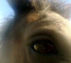oeil de mon loupy d'amour