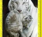 la tigre avec son petit