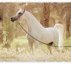 Je LoOve les chevauxXx <33