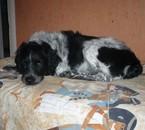 mon chien aaron