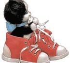 chaton dans des baskets