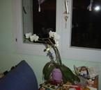 ma fantastique orchidée