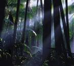 spooceshrub forest