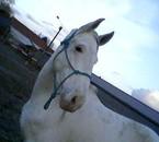mon  cheval que j'aime!!!