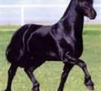 Cheval Frisson