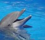 j'adore aussi les dauphins