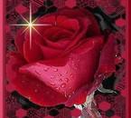 je vous offre une belle fleur