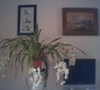 orchidée dans la chambre