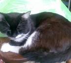 mon chat adorer et que j oublirais jamais je t aime grave