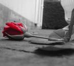 une rose rouge abandonner