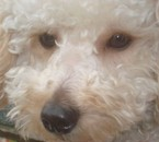 CHADOOOOOOO Mon chien (L)
