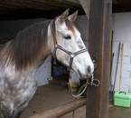 malicia (arrivée au centre equestre le 18/01/2009)
