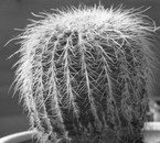 cactus by hiamy