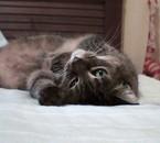 Mon chat : Lédy