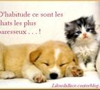 petit chaton et petit chiot