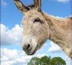 Echantillon de mes clichés : Jumangi, l'âne du club ^^