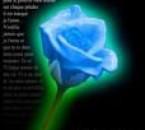 une rose pour toi..