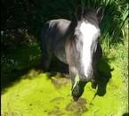 Tonerre se baigne dans l'eau bien fraiche (et bien verte...)