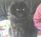 aniis mon chat jl'aime