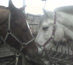 Mes poneys d'amouuurs <3