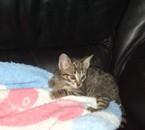 mijn kat