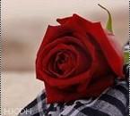 c pr my lover