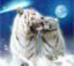 trop mignonne la tof des tigre