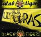 fatal tiger